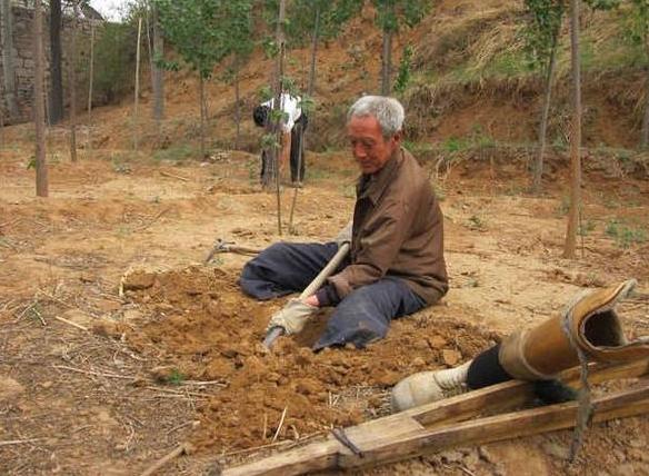 Vovô sem pernas planta 17.000 árvores em 19 anos e salva floresta