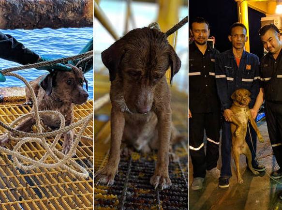 Cachorro nada até plataforma de petróleo a 220 km da costa