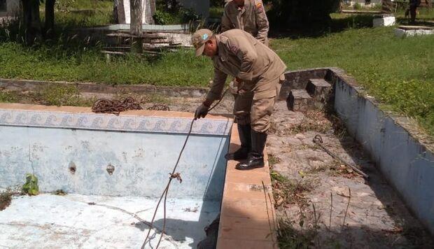 Jacaré é resgatado ao cair dentro de piscina de pousada