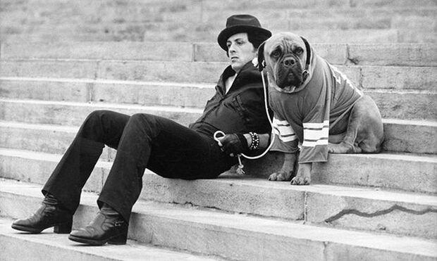 Sylvester Stallone diz que vendeu cachorro por causa de dinheiro