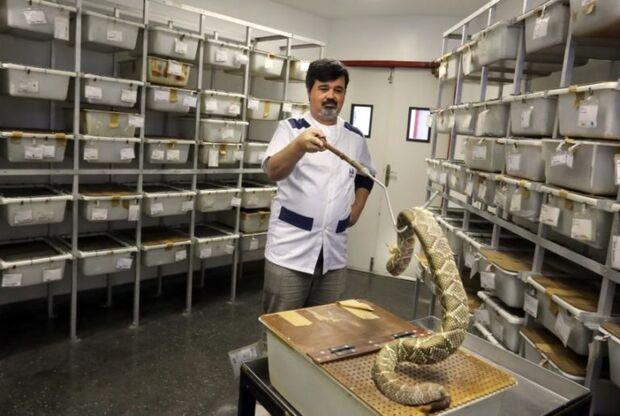 200 pessoas morrem por dia vítimas de picada de cobra