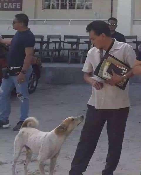 Cachorro leal esperou no mesmo lugar por semanas pela volta do dono