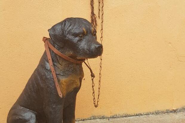 PM checa denúncia de maus-tratos a cachorro e descobre animal de plástico