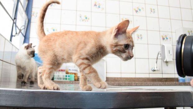Agendamento de castrações de felinos na Capital será liberado na segunda-feira