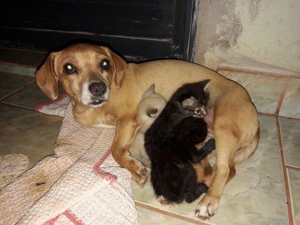 Cadelinha de 7 anos que nunca teve filhos adota três gatinhos abandonados