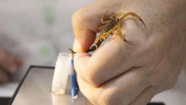 Menina de 6 anos morre após ser picada por escorpião