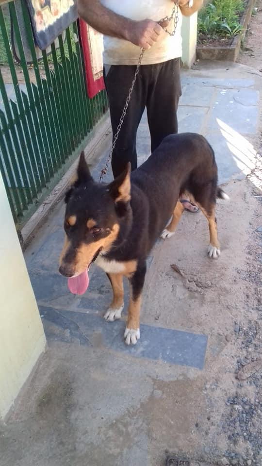 Mulher procura motorista de Gol prata que abandonou cachorro em Campo Grande