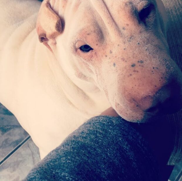 Família pede ajuda para encontrar cachorra desaparecida em Campo Grande