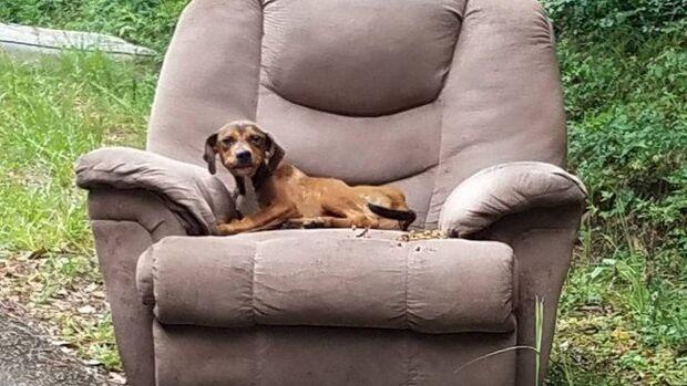 Cãozinho abandonado em sofá à beira de estrada fica esperando o dono voltar