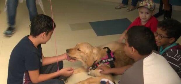 Cadela Hope ajuda no tratamento de pacientes de câncer no INCA