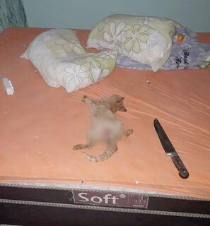 Gato é morto a facadas e encontrado com sinais de estupro