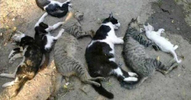 """""""Não quero mais ter bichos"""", diz mulher que teve seis gatos envenenados"""