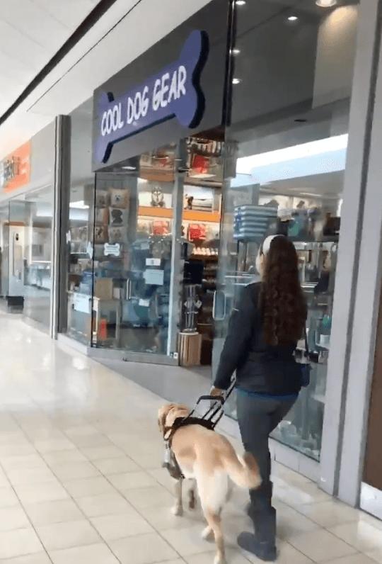 Cão-guia leva dona a loja de animais sempre que vão ao shopping sem que ela perceba