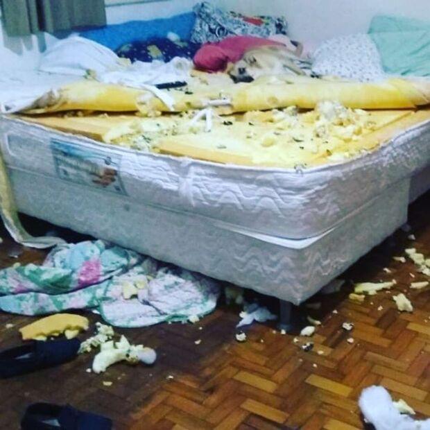 Dona de cão que viralizou após destruir quarto ganha colchão
