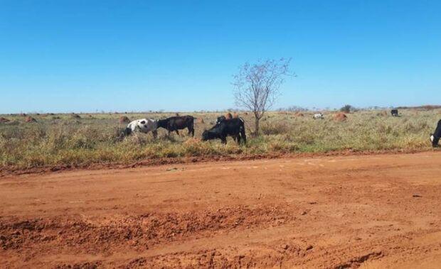 Proprietários de gado são multados em R$ 15 mil por criar animais em área protegida