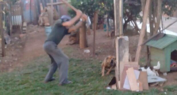 Idoso que matou cachorro com foice é multado em R$ 3 mil e vai responder por maus-tratos