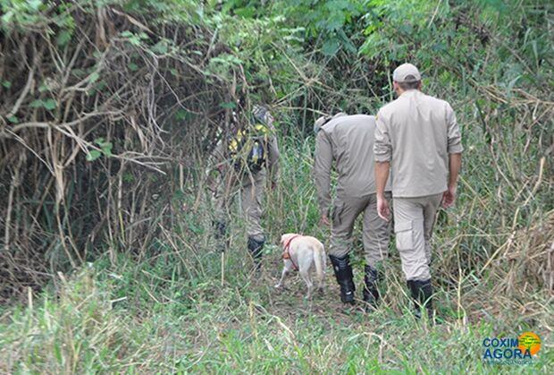 Bombeiros usam cães e procuram idosa com Alzheimer no Pantanal