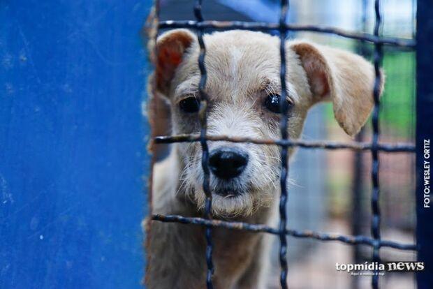 ONG realiza bazar para manter ajuda a animais abandonados