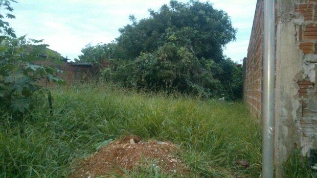 Mais de 100 donos de terrenos podem ser multados por falta de limpeza em Campo Grande