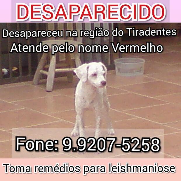 Família pede ajuda para encontrar cachorro que está desaparecido
