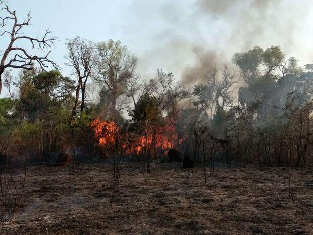 Bituca de cigarro pode ter causado incêndio em reserva indígena