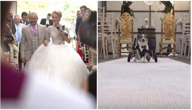 Viralizou: noiva se casa na companhia de oito cachorros deficientes que resgatou