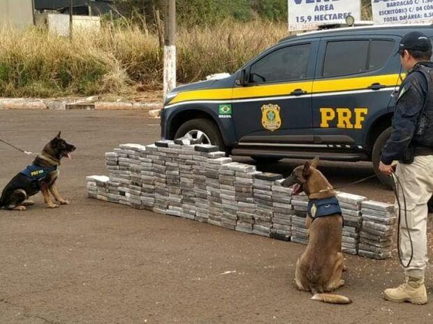 PRF usa cães e descobre cocaína avaliada em R$ 24 milhões