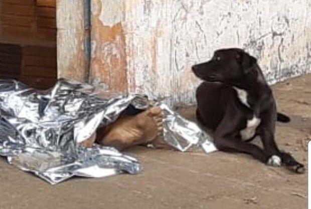 Cachorro 'vela' dono assassinado a facadas e imagem comove internautas