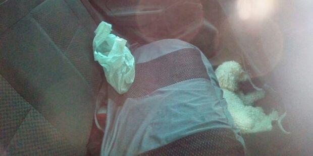 Donos esquecem cachorro dentro de carro e animal é resgatado pelos bombeiros
