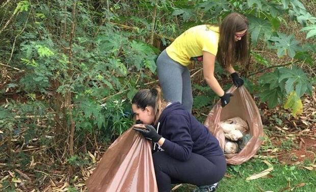 Dia Mundial da Limpeza quer reunir 800 voluntários