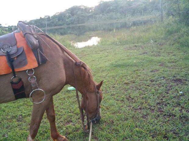 Homem cai de cavalo e morre na Santa Casa