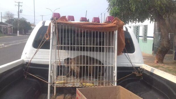 CCZ fecha clínica veterinária que mantinha macaco 'esquecido' por paraguaia