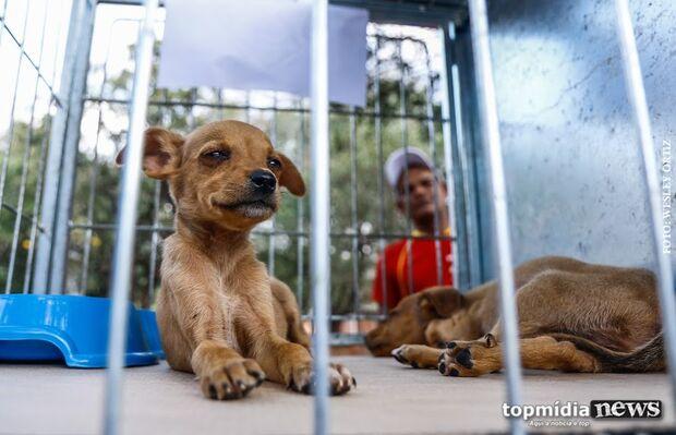 Projeto cria Farmácia Veterinária Popular para baratear remédios para pets em MS