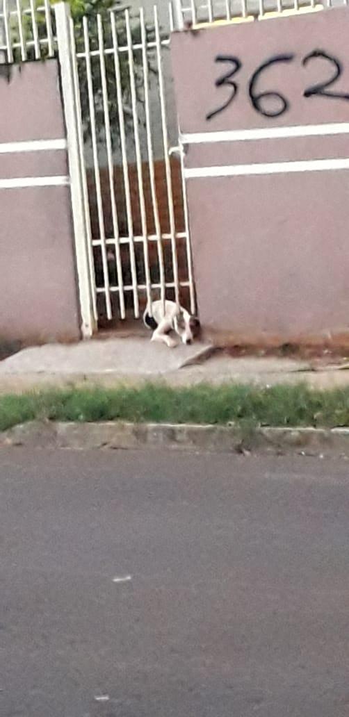 Cachorro é abandonado sem comida, água e no meio de fezes no Nova Lima, denuncia leitor