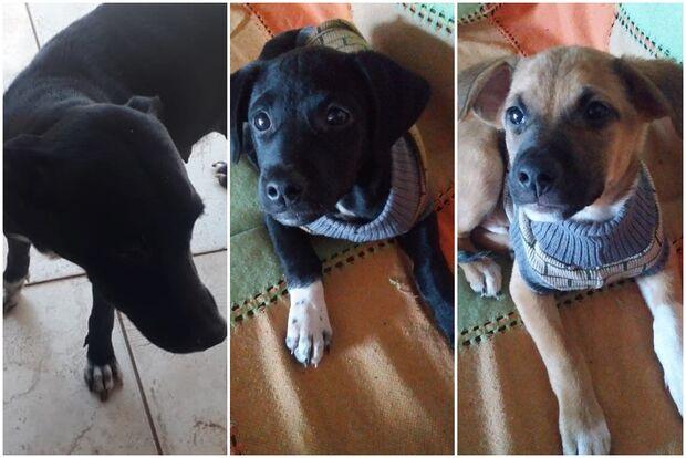 Família procura cachorrinhos que sumiram na região do Lar do Trabalhador