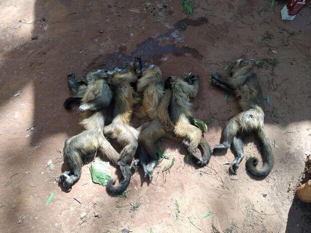 PMA encontra cincos macacos mortos a tiros; animais também teriam sido envenenados