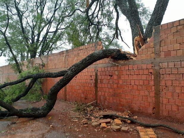 Árvore cai e destrói muro no bairro Pioneiros