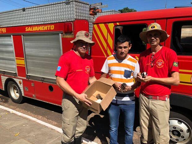 TODA VIDA IMPORTA: bombeiros salvam filhotes de cachorros picados por abelhas
