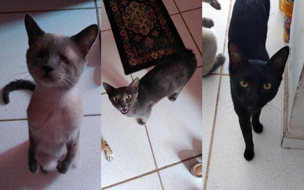 Síndico ameaça sacrificar gatos do condomínio na Ernesto Geisel, denuncia servidora
