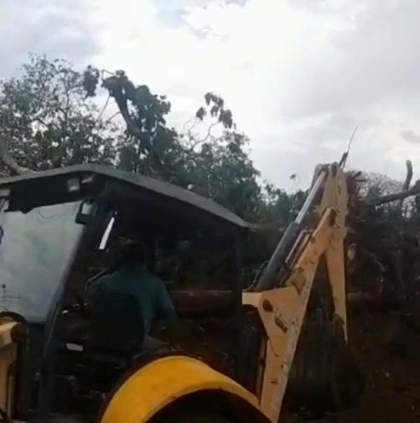 VÍDEO: moradora faz barraco e impede derrubada de jatobá no Tayamã Park