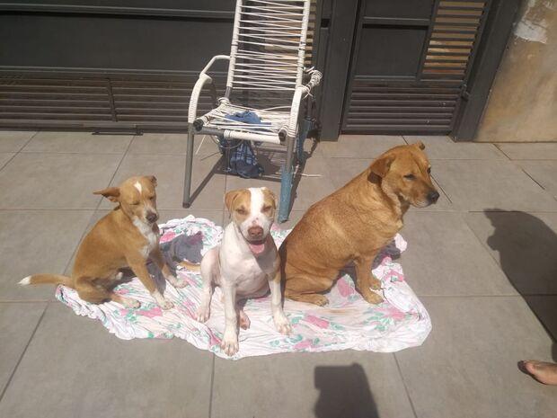 Família paga até recompensa para achar três cachorrinhas do coração no Centenário