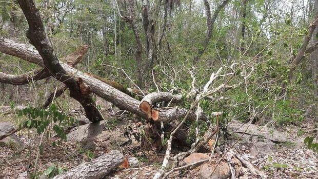 Assentada é multada em mais de R$ 8 mil por corte de árvores