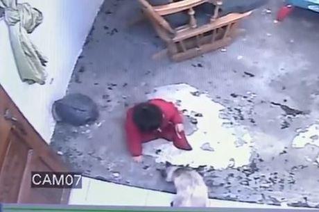 Gatinho salva bebê de cair de escada na Colômbia; assista