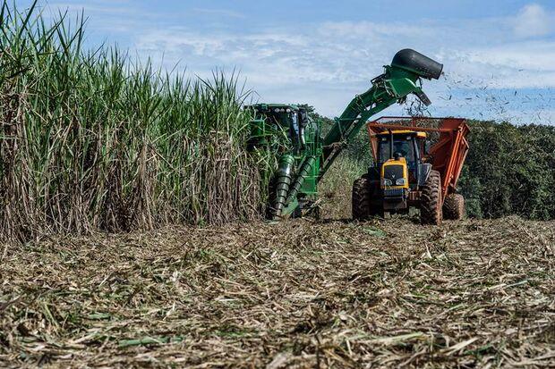 Bolsonaro revoga decreto que impede cultivo de cana em áreas como Amazônia e Pantanal