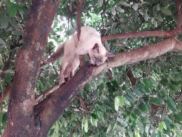 Moradora se assusta com sangue na calçada e encontra gato morto em árvore