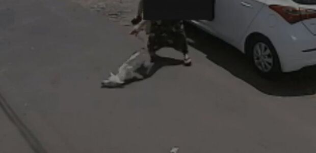 Cachorro com deficiência é abandonado duas vezes