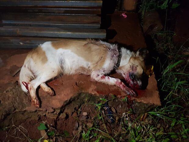 Moradora do Panamá mata cadela a pauladas