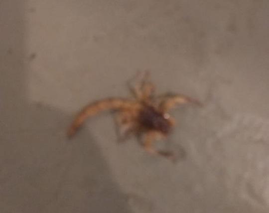 Escorpião sai de sacola de brinquedo e pica menina de três anos em Campo Grande