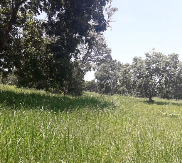 Satélite 'denuncia' fazendeiro por desmatar 13 hectares de floresta nativa