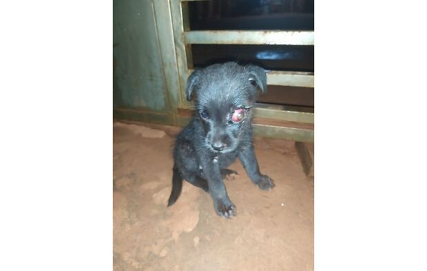 Cadelinha é abandonada com olho infeccionado, é resgatada e precisa de um lar